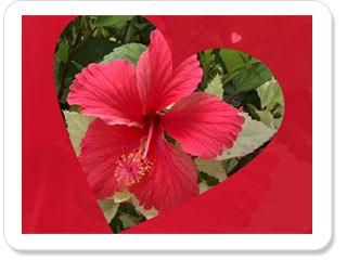 بالصور انت في قلبي , صور قلوب روعه 5784 14