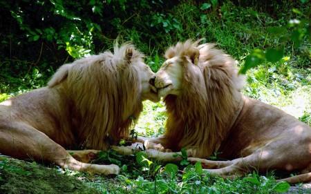صورة صور حيوانات , احلي صور حيوانات