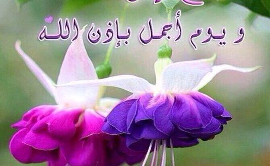 صور ورود مكتوب عليها عبارات جميله , اجمل العبارات المكتوبه علي الورود المتنوعه