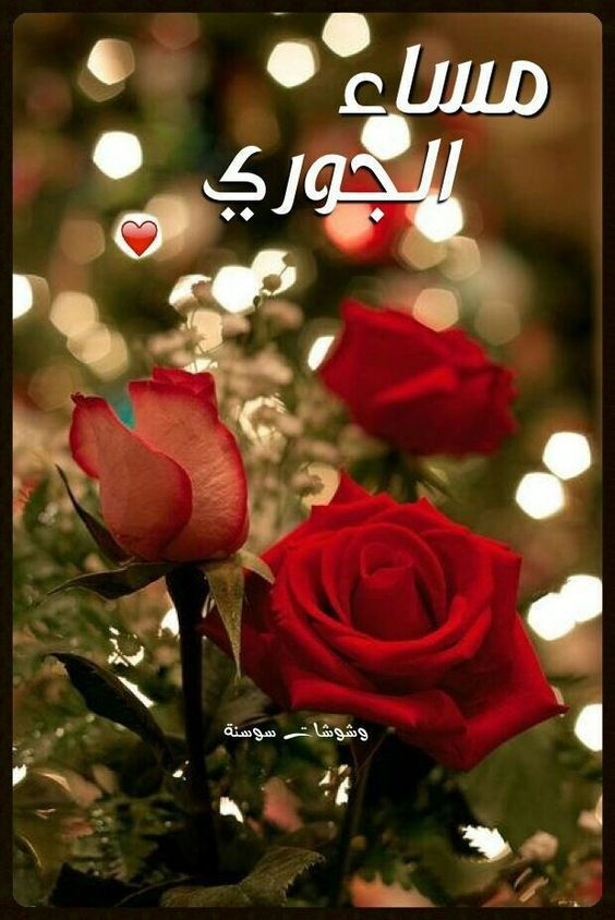 بالصور اجمل صور مساء الخير , اجمل مسي علي الحبايب من القلب 6530 4