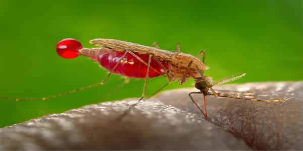 صور مرض الملاريا , معلومات هامه نتعرغ عليها لمرض الملاريا