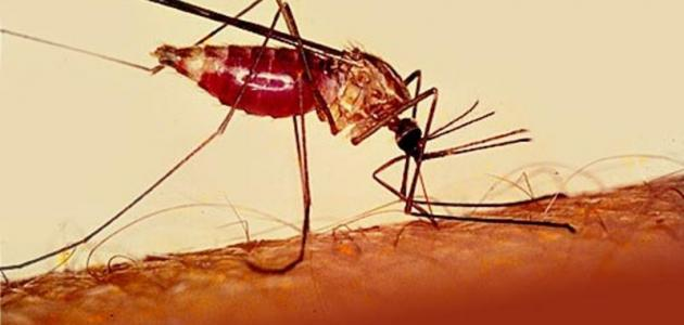 صورة مرض الملاريا , معلومات هامه نتعرغ عليها لمرض الملاريا