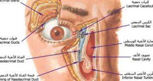 صور مكونات العين , معلومات هامه عن اجزاء العين