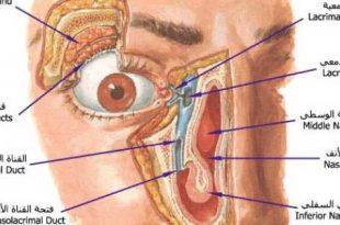 صورة مكونات العين , معلومات هامه عن اجزاء العين