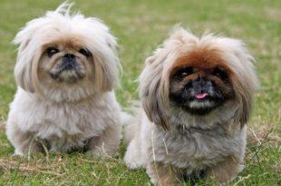 صور انواع الكلاب , كلاب تخطف الانظار لاختلافها
