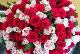 بالصور شعر عن الورد , اجمل شعر للورد 1265 10