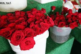 بالصور شعر عن الورد , اجمل شعر للورد 1265 11