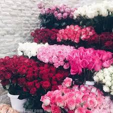 بالصور شعر عن الورد , اجمل شعر للورد 1265 2
