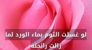 بالصور شعر عن الورد , اجمل شعر للورد 1265 7