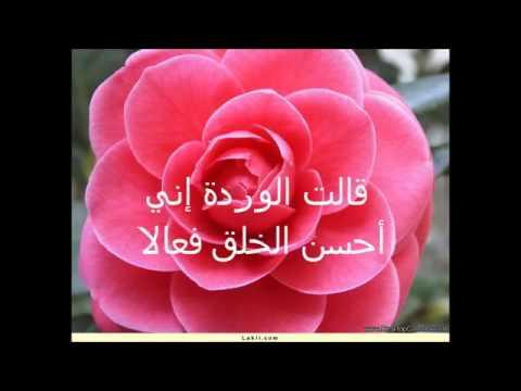بالصور شعر عن الورد , اجمل شعر للورد 1265 8