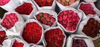 بالصور شعر عن الورد , اجمل شعر للورد 1265 9