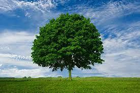 بالصور صور عن البيئة , اروع صور للبيئه 1485 1