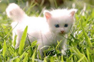 صورة صور حيوانات اليفه , اجمل الصور للحيوانات الاليفه