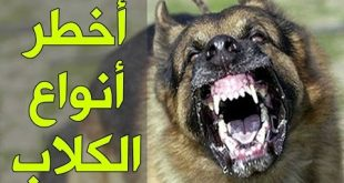 صورة اخطر انواع الكلاب , انواع الكلاب الخطيره جدا