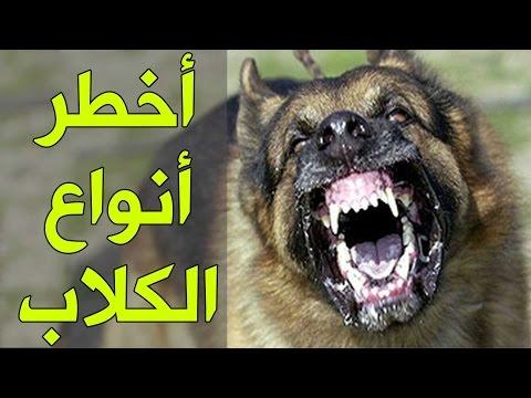 صور اخطر انواع الكلاب , انواع الكلاب الخطيره جدا