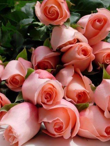 بالصور صور ورد جميل , انواع الورد وجماله 2657 3