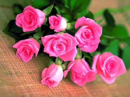 بالصور صور ورد جميل , انواع الورد وجماله 2657 8