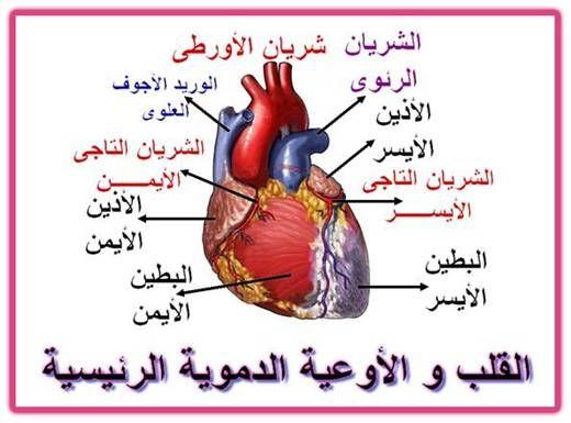 بالصور علاج مرض القلب , مرض القلب واهم طرق العلاج 2689 4