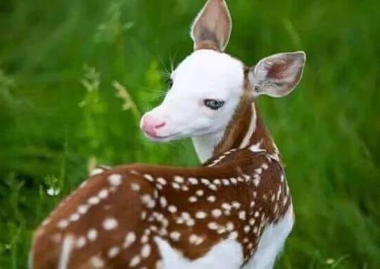 صوره اجمل حيوان في العالم , اجمل المخلوقات الحيوانية