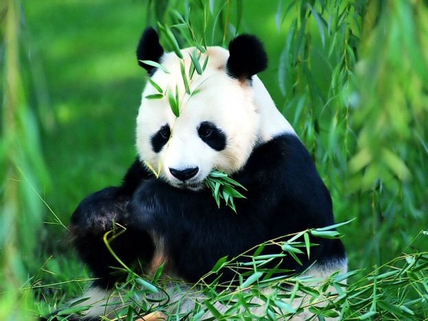 بالصور اجمل حيوان في العالم , اجمل المخلوقات الحيوانية 5350 10