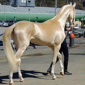 بالصور اجمل حيوان في العالم , اجمل المخلوقات الحيوانية 5350 2