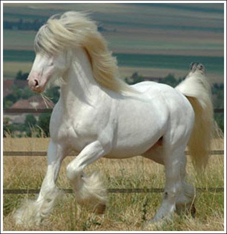بالصور اجمل حيوان في العالم , اجمل المخلوقات الحيوانية 5350 4