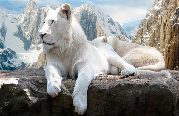 بالصور اجمل حيوان في العالم , اجمل المخلوقات الحيوانية 5350 7
