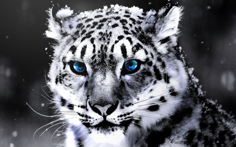 بالصور اجمل حيوان في العالم , اجمل المخلوقات الحيوانية 5350 9
