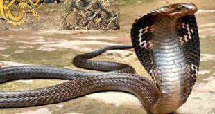 صورة انواع الثعابين , تعرف على العديد من انواع الثعابين