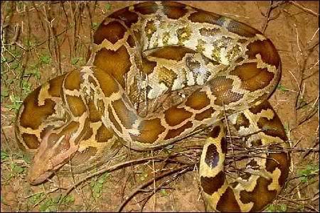 بالصور انواع الثعابين , تعرف على العديد من انواع الثعابين 5709 3