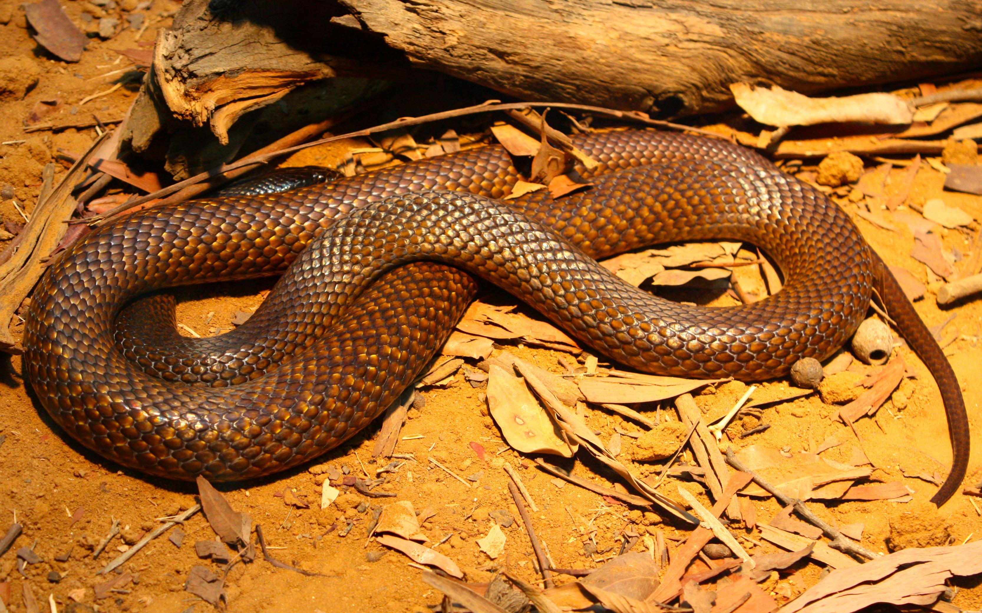 بالصور انواع الثعابين , تعرف على العديد من انواع الثعابين 5709 5