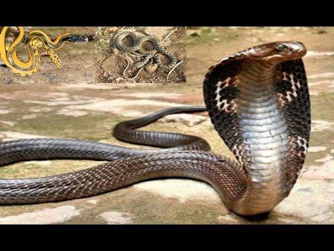 بالصور انواع الثعابين , تعرف على العديد من انواع الثعابين 5709