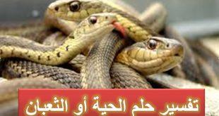 بالصور الثعابين في المنام , تفسير رؤية الثعابين فى المنام 5729 3 310x165