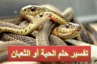 صورة الثعابين في المنام , تفسير رؤية الثعابين فى المنام