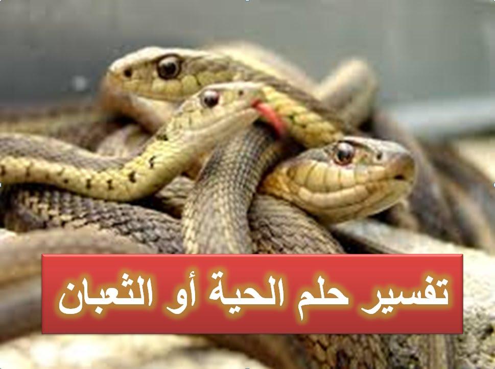 صور الثعابين في المنام , تفسير رؤية الثعابين فى المنام