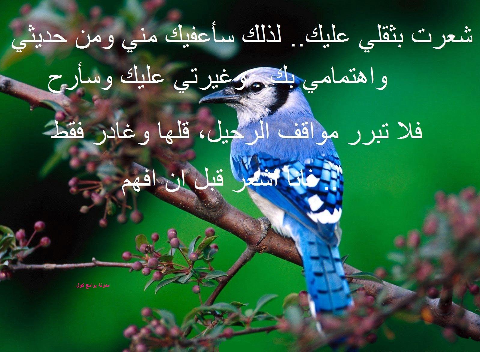 صورة صور رسائل حب , مين وين هالكلام الحلو مره 1276 7