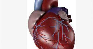 صوره صور قلب الانسان , اساس حياه الانسان