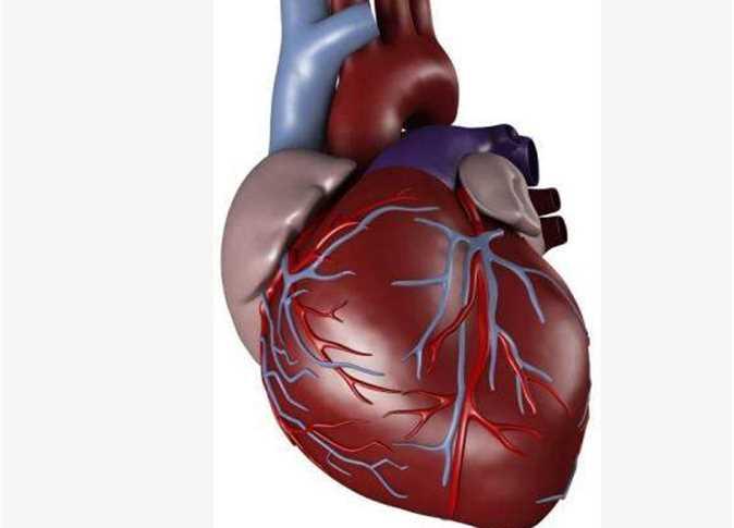 صورة صور قلب الانسان , اساس حياه الانسان