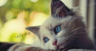 صوره صور قطط جميلة , قطط جميله حصريا في صور