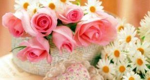 صوره اجمل صور الورد , صور ورد رائعه