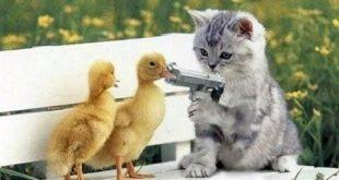 صور قطط مضحكة , اشهر واجمل القطط