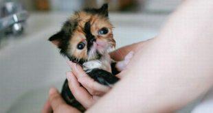 صوره قطط جميلة , اجمل عيون للقطط