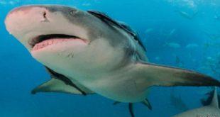 صوره صور سمك القرش , صور جميلة وغريبة لسمك القرش