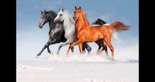 صوره صور خيول , انبهر باجمل المخلوقات الخيول .