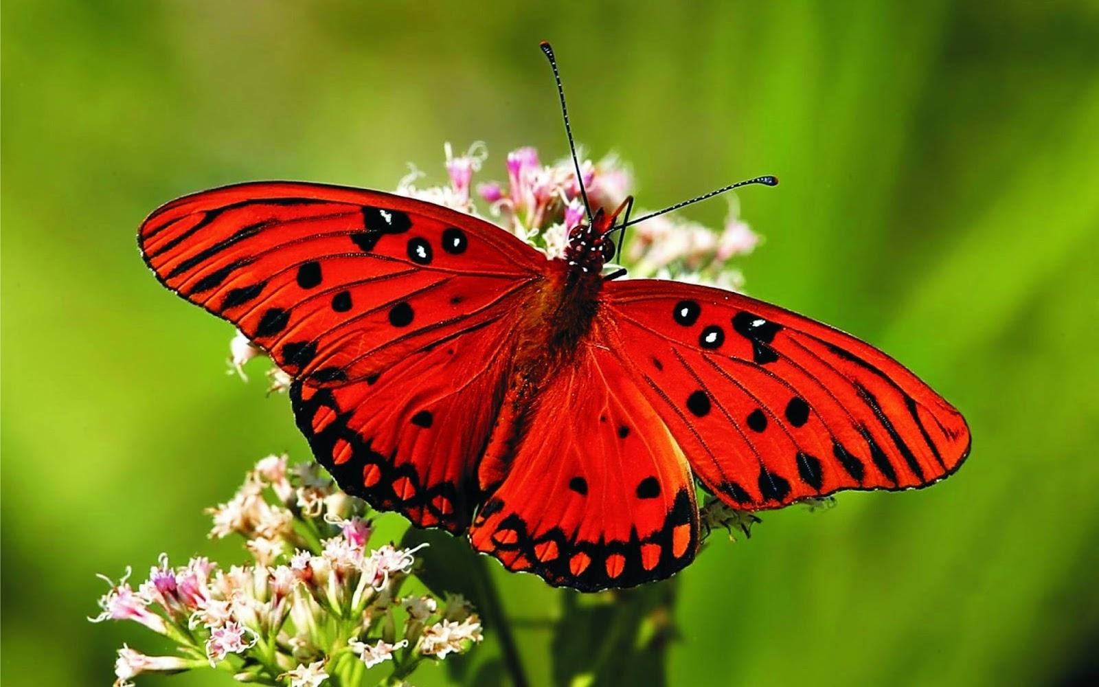 بالصور صور فصل الربيع , اجمل الفصول هو فصل تفتح الزهور 4779 10