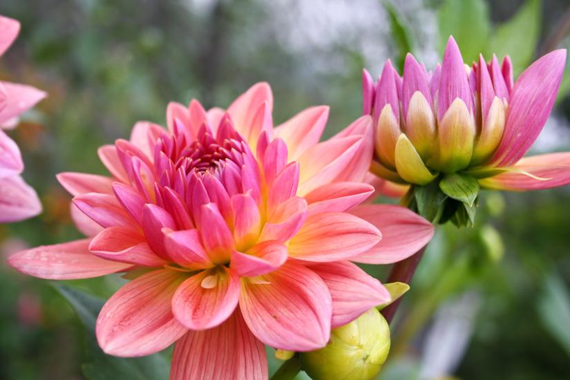 بالصور صور فصل الربيع , اجمل الفصول هو فصل تفتح الزهور 4779 11