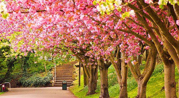 صور صور فصل الربيع , اجمل الفصول هو فصل تفتح الزهور