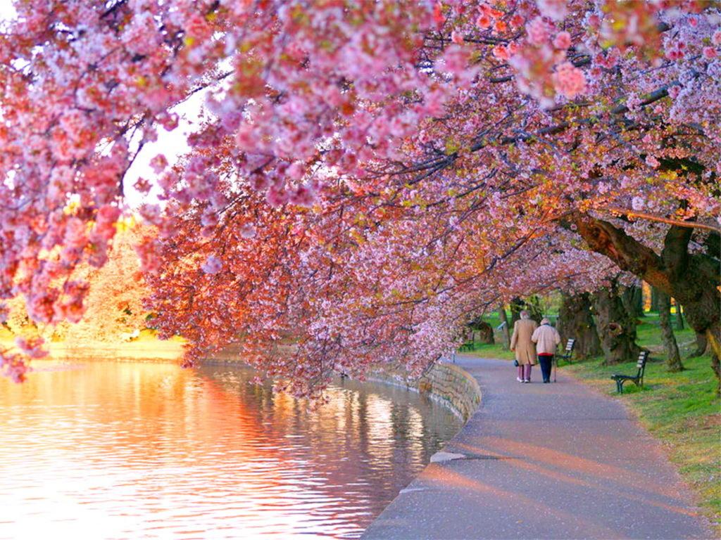 بالصور صور فصل الربيع , اجمل الفصول هو فصل تفتح الزهور 4779 2