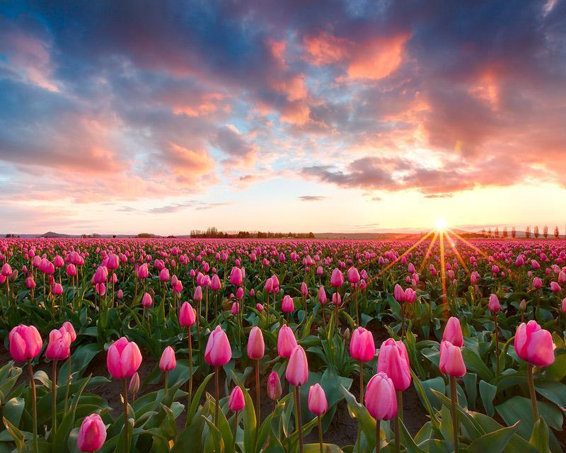 بالصور صور فصل الربيع , اجمل الفصول هو فصل تفتح الزهور 4779 6