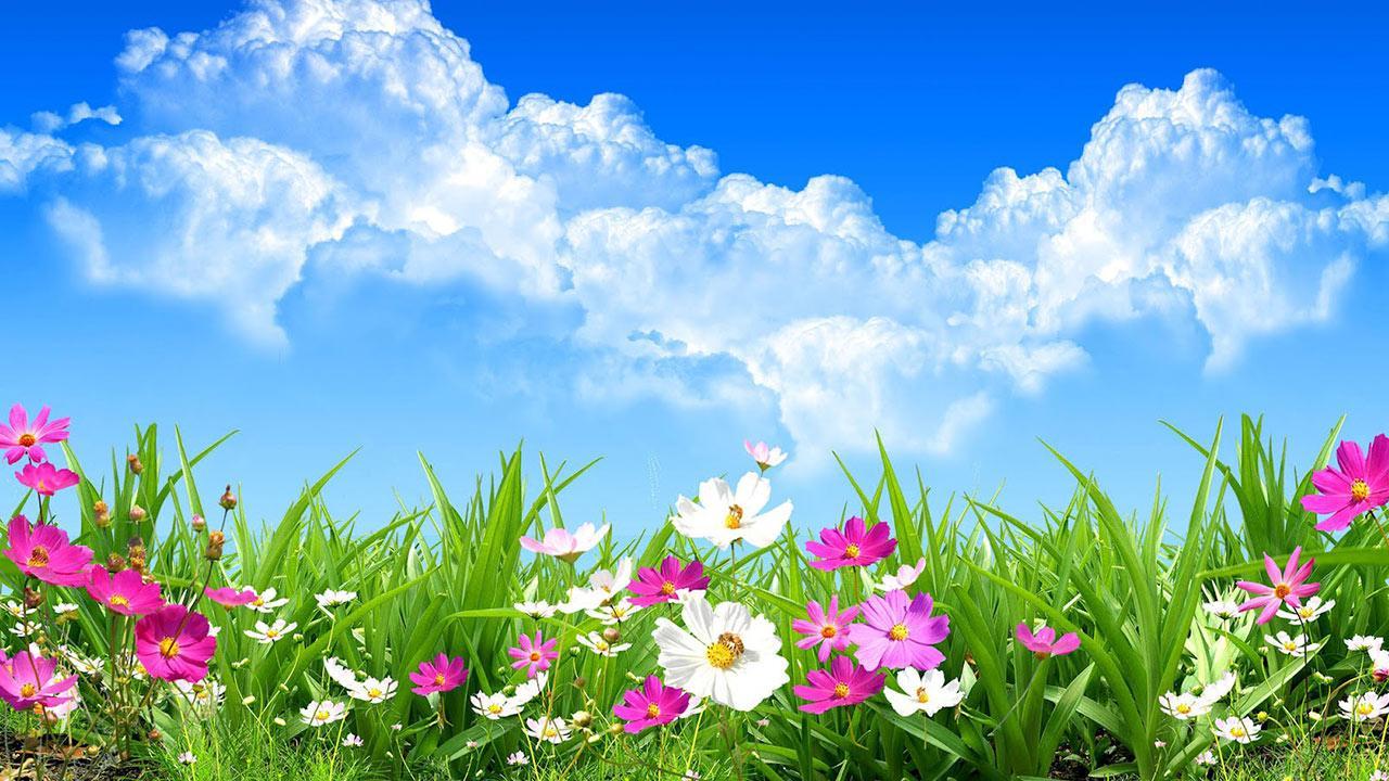 بالصور صور فصل الربيع , اجمل الفصول هو فصل تفتح الزهور 4779 7